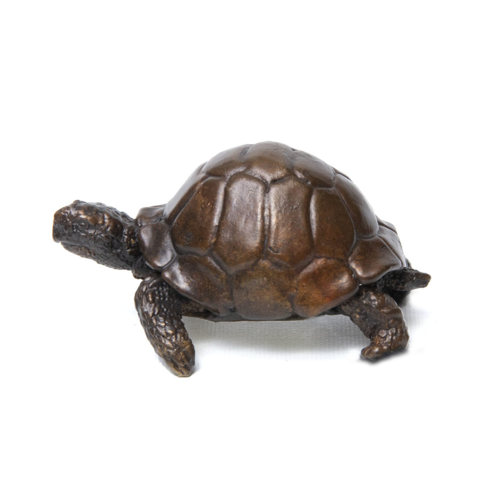 Tortoise1 1024x1024
