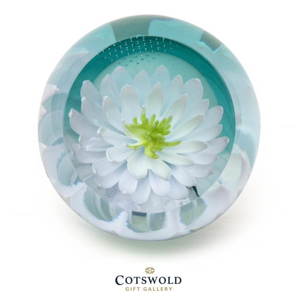 Floral Charm Water Lily 02 U19034 1024x1024