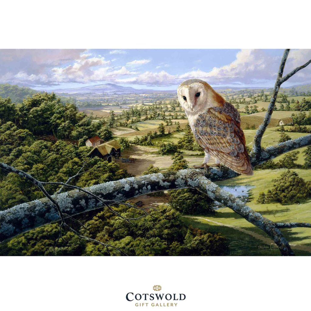 592206 Barn Owl Maxi Copy 1 1024x1024